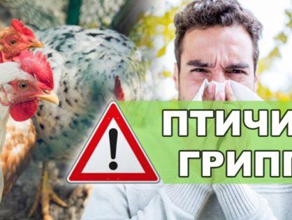 Рекомендации по профилактике распространения вируса гриппа птиц